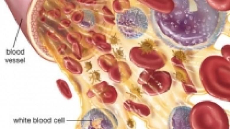 Pasqyra e gjakut: Cilat janë vlerat normale?