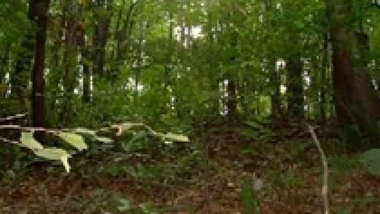 Armatosen rojet e pyjeve