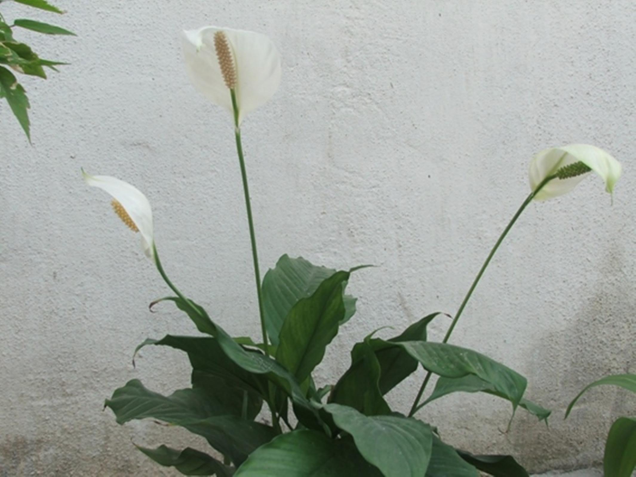 lule te bukura per msn wwwimgkidcom the image kid