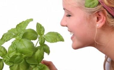Erëzat, llojet dhe si t'i përdorim në kuzhinë