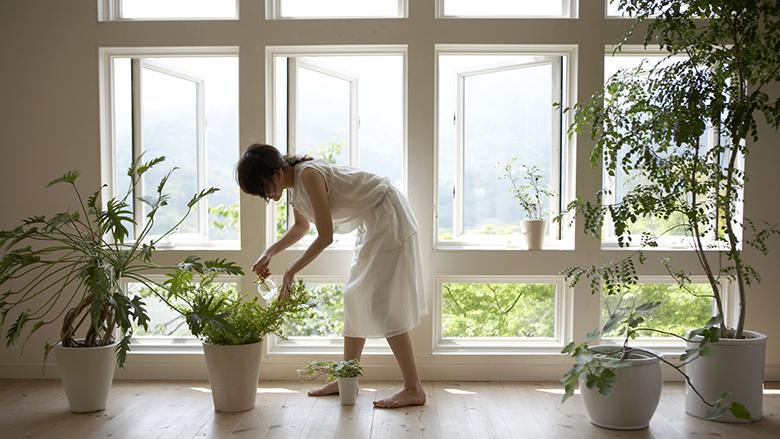 Bimët për shtëpi sipas Feng Shui