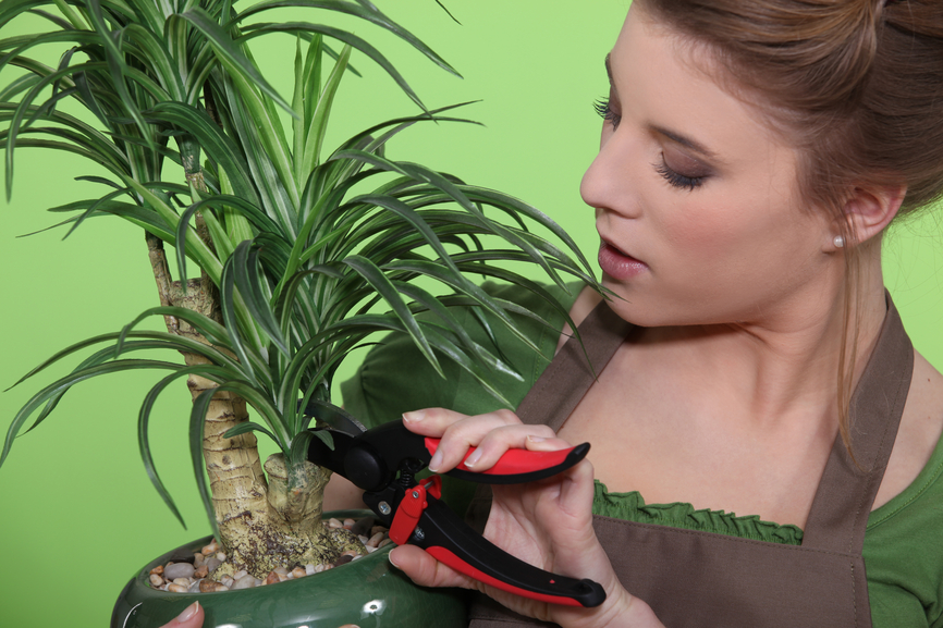 Woman pruning a houseplant