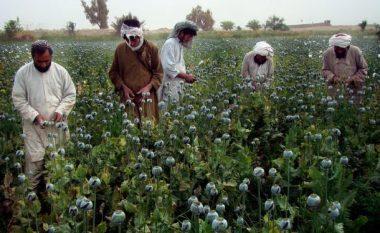 Prodhimi i opiumit në Afganistan është rritur për 43 për qind