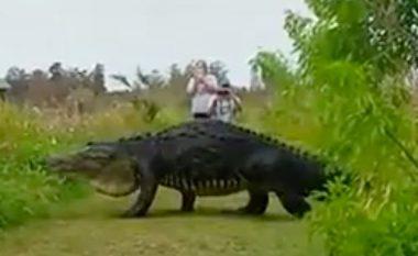 Si nëpër filma: Aligatori gjigant shëtitet para këmbëve të turistëve të shokuar (Foto/Video)