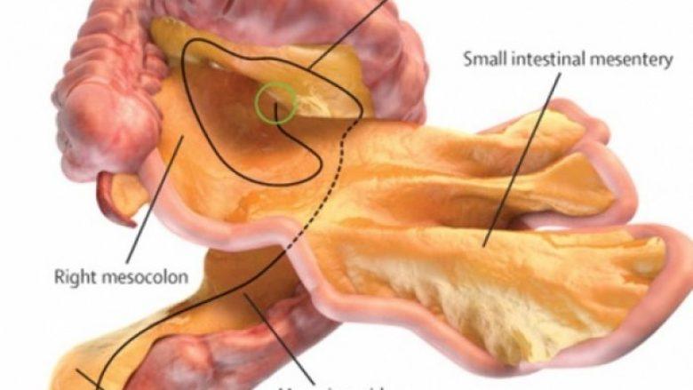 Shkencëtarët thonë se ekziston një organ në trupin tonë për të cilin nuk është folur më parë