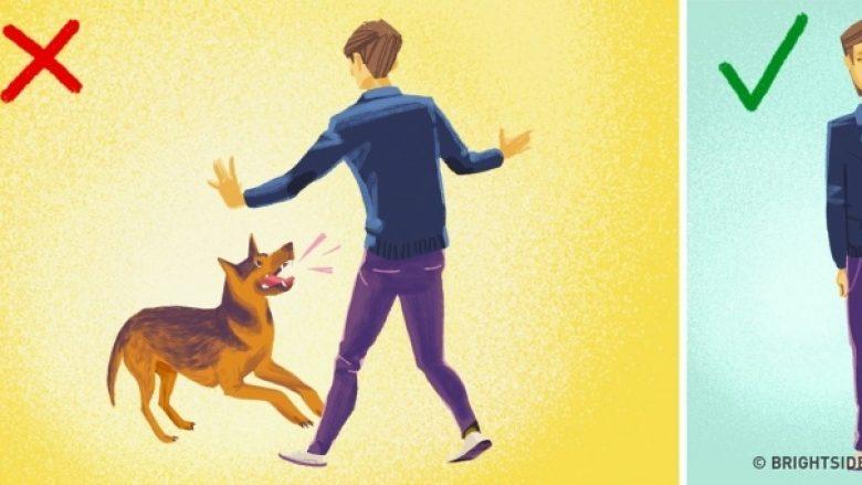 Këshilla mbijetese për dimër: Si ta shmangni sulmin nga qentë endacak?