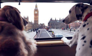 Shembull për vendet tjera: Londra tani me autobus vetëm për qentë