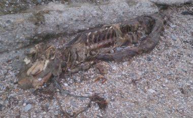 Uji nxjerr në plazh krijesën misterioze të gjatë tri metra, askush nuk po e din çfarë është! (Foto)