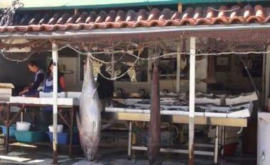 """Kapet peshku """"alien"""" në Vlorë (Video)"""