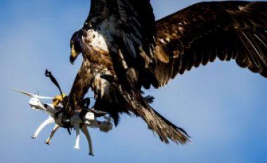 Nuk është histori filmi, por realitet: Franca stërvit shqiponjat për të luftuar dronët