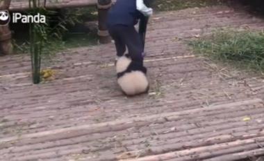 Ky njeri ka një hall – të punojë apo të merret me pandan! (Video)