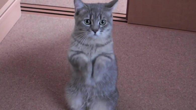 E ka mësuar macen me një truk të pazakonshëm: Tani është bërë hit i vërtetë në internet! (Video)