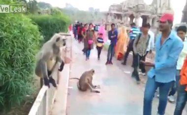 Mashtron majmunin kinse po i ofron ushqim, kur afrohet e godet me gjithë forcën shuplakë (Video)