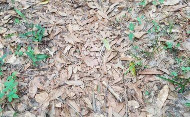 Imazhi që po çmend botën: A mund ta gjeni gjarprin e fshehur në gjethe? (Foto)