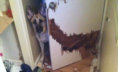 I kishin lënë kafshët vetëm, pronarët ndajnë fotografitë e kaosit që gjetën, kur u kthyen në shtëpi! (Foto)