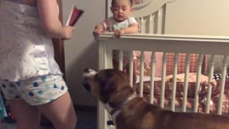 Mbrojtësi më i madh: Qeni dado mbron beben nga nëna e hidhëruar (Video)