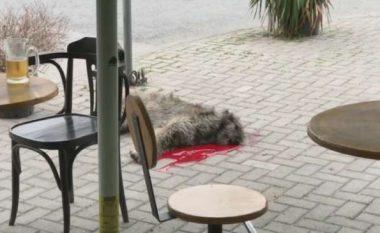 E mbyti me sëpatë qenin në mes të Shkupit se lehte shumë (Video)
