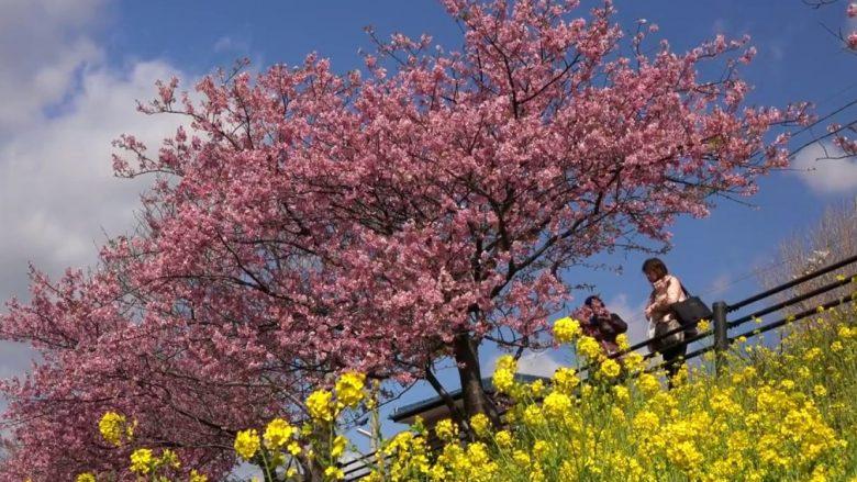 Vendi ku pranvera fillon më herët se kudo tjetër