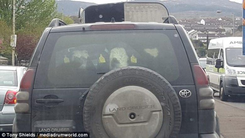 Transporton tre viça në pjesën e pasme të Toyota Land Cruiser (Video)
