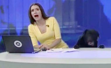 Prezantuesja e lajmeve tmerrohet kur gjatë transmetimit të drejtpërdrejt futet një qen në studio (Video)