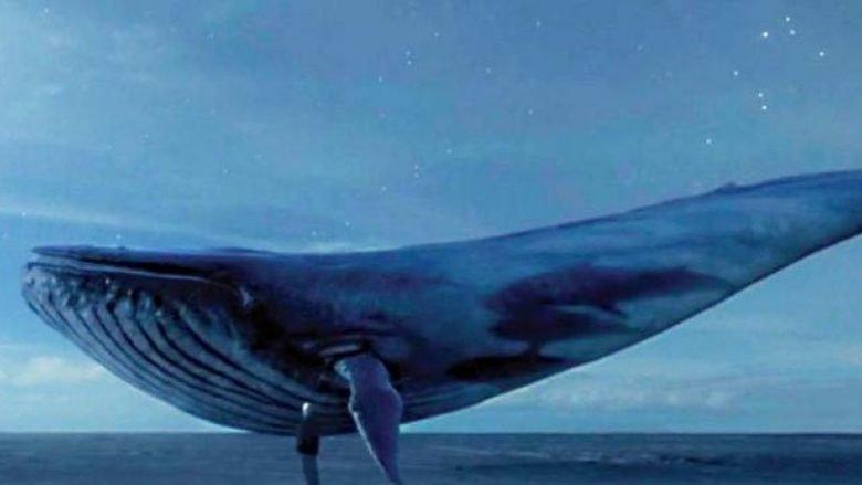 """Sfida """"Balena e Kaltër"""": Loja që po ua merr jetën shumë të rinjve (Foto/Video)"""