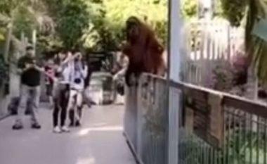 Ikja e kafshës nga kafazi shkaktoi evakuimin e kopshtit zoologjik (Video)