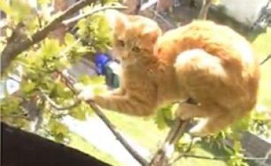 Qëndroi për tre ditë në degët e pemës së lartë, ra posa iu afrua ndihma (Video)