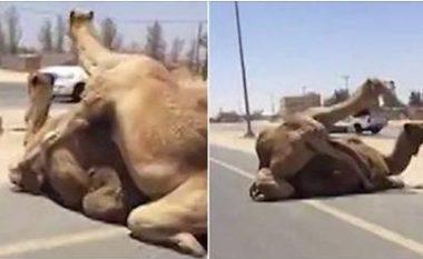 Devet kishin vendosur të mbarësoheshin në autostradë, shkaktojnë kaos në komunikacion (Video,+16)