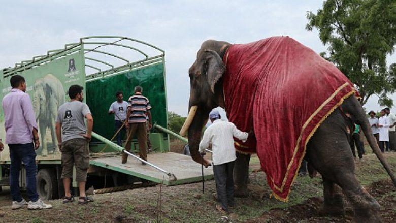 Shpëtohet elefanti që u keqtrajtua për më se gjysmë shekulli (Video)