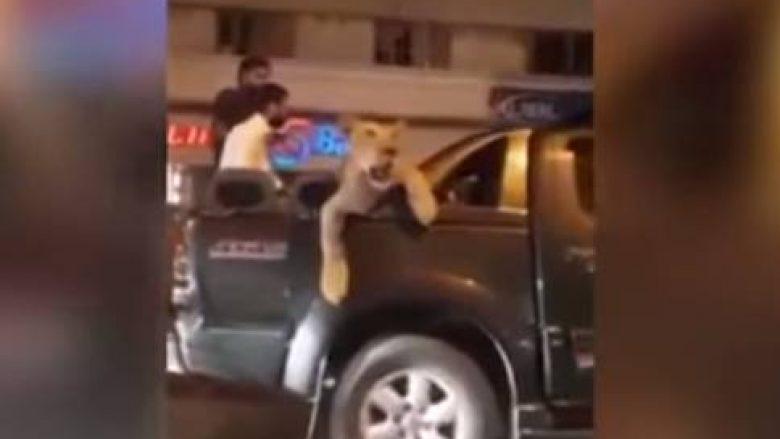 Nëpër rrugët e kryeqytetit me luanin mbi veturë, pronari thotë se po e dërgonte tek veterineri (Video)