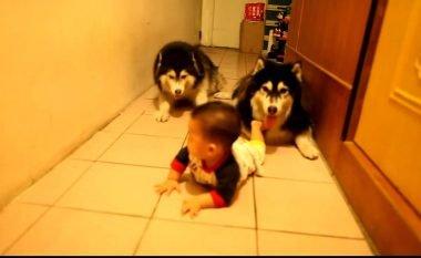 Qentë imitojnë vogëlushin – skenë të tillë komike vështirë të keni parë ndonjëherë! (Video)