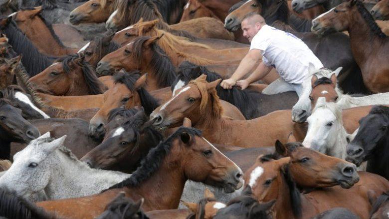 Festivali shqetësues ku kuajve të egër u shkulin jelat dhe bishtat për së gjalli (Foto)