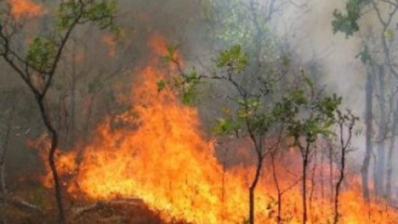 17 vatra zjarri, gjatë 24 orëve në Shqipëri