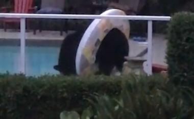 Ariu afrohet te pishina, provon edhe rrethin e gomës (Video)