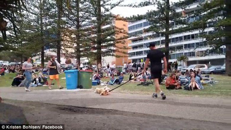Qeni që nuk i bindej pronarit argëtoi të pranishmit në park (Video)