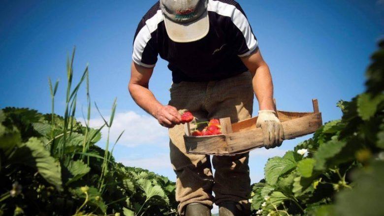 Fruta dhe perime: Grindje tregtare mes Kroacisë dhe Serbisë