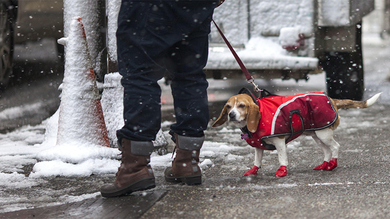 A man walks his dog during a snowstorm on Feb. 9, 2017 in Philadelphia.