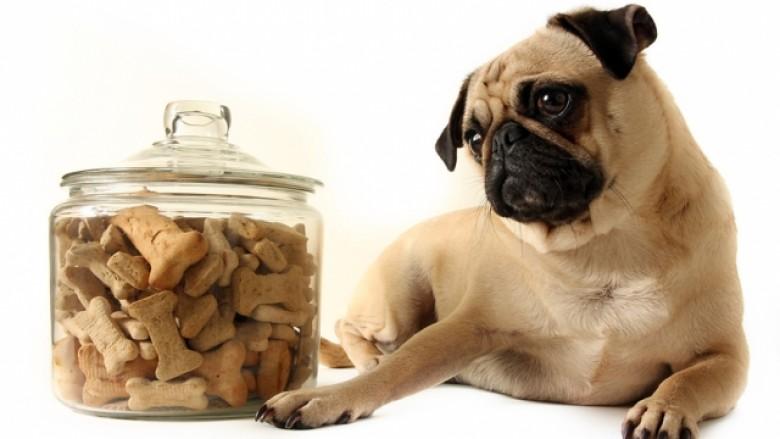 Çfarë përmban ushqimi i kafshëve?