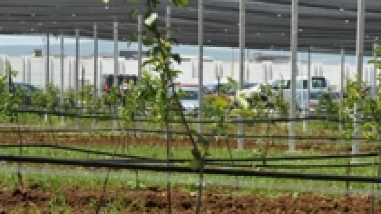 Ministria e Bujqësisë përkrah zonat rurale