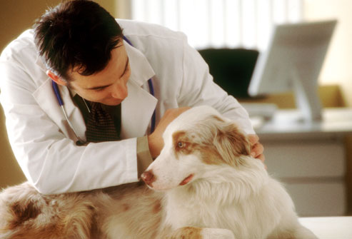 corbis_rm_photo_of_vet_examining_dog