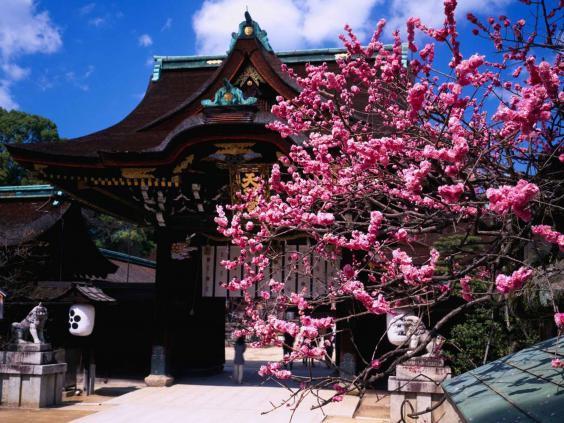 japan-plum-flower-alamy