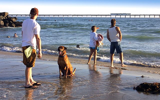 Ocean-Beach-Dog-Beach-2-Courtesy-Joanne-DiBona-SanDiego