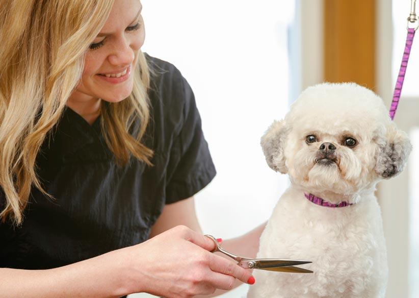 dog-grooming-lg