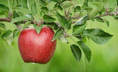 Diskutohet për prodhimtarinë e mollës në Kosovë