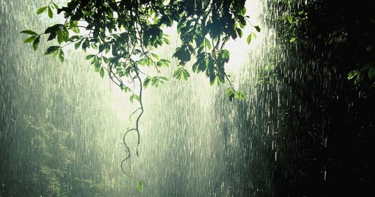 Sot mot me shi në Shqipëri