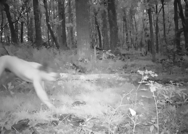 "Pic shows: man running like a tiger in the woods;nnA forest phototrap snapped an unexpected kind of wild beast - a naked man high on LSD who thought he was a tiger.nnA Czech man identified only as Marek H. tried to treat his depression by taking LSD, according to reports.nnAfflicted by the drug, he ran off into the Polish forest, stripped naked and discovered his ""true personality"" - that of a tiger.nnBemused foresters handed the pictures straight to police, who later apprehended Marek H., who turned out to be a 21-year-old from the northern Czech Republic town of Liberec.nnMarek confessed to police that he had taken the hallucinatory drug LSD.nnHe said it started to work immediately and that he felt he had become a Siberian tiger. He said that this was when is ""true personality woke up.""nnHe told policemen that, once he was a tiger, he had ""picked up a scent"" and felt compelled to follow it.nn In eight hours he travelled 25 kilometres (15.5 miles) along the Czech-Polish border, in a forested area.nnBecause the man did not have any drugs with him, he was only fined and will not face any further charges.nnThough with his naked pictures a source of amusement on the internet, he may try a different way to alleviate his depression in the future."