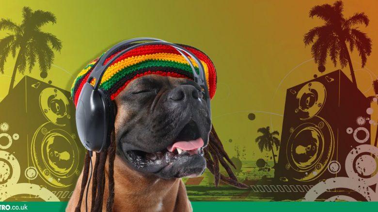 Hiqjani stresin qenit duke i lëshuar muzikë reggae