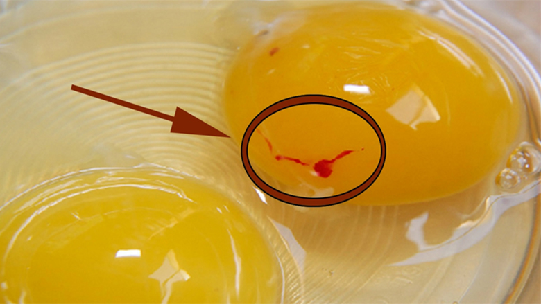 Çfarë është ajo pikla E KUQE në vezë dhe a është E RREZIKSHME për shëndetin