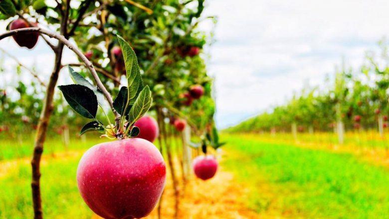 MBPZHR dhe BERZH prezantojnë standardet për sigurinë ushqimore
