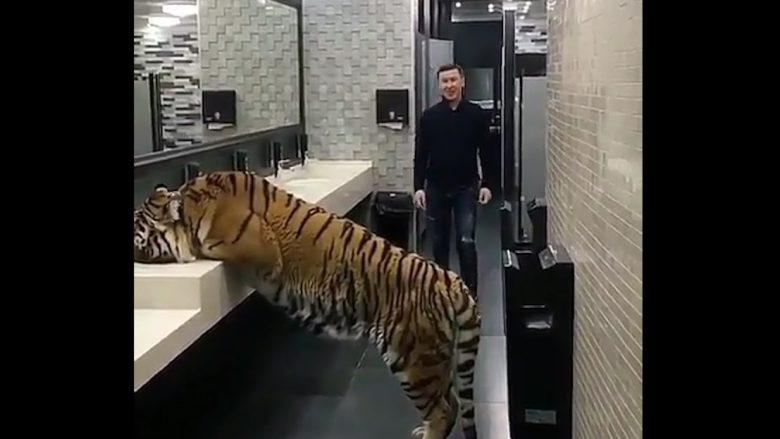 Tigri në një tualet të restorantit, por kjo nuk është e gjithë befasia (Video)